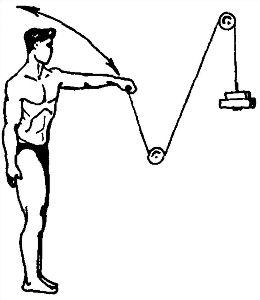 бизнес, комплекс упражнений в картинках для мышц плеча чесноком